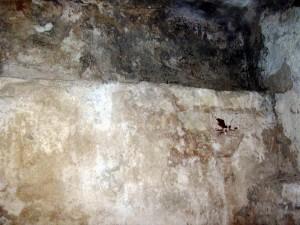Zawilgocony mur z pleśnią i grzybem