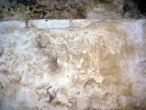 Zawilgocony mur z grzybem i pleśnią